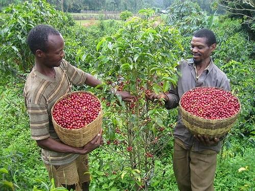 Ethiopia Coffee Farmers