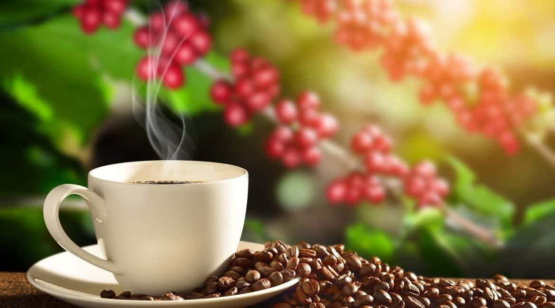 Why Is Geisha Coffee So Expensive